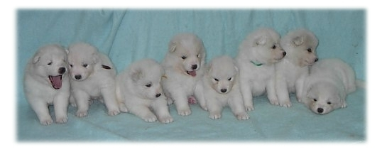 Calico's litter at 4 weeks.  Max is 3rd from the right.